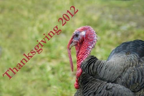 living_turkey edit