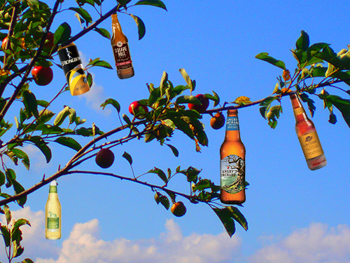 branch_apple_tree_cider