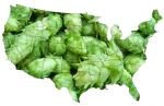 united staes of hops
