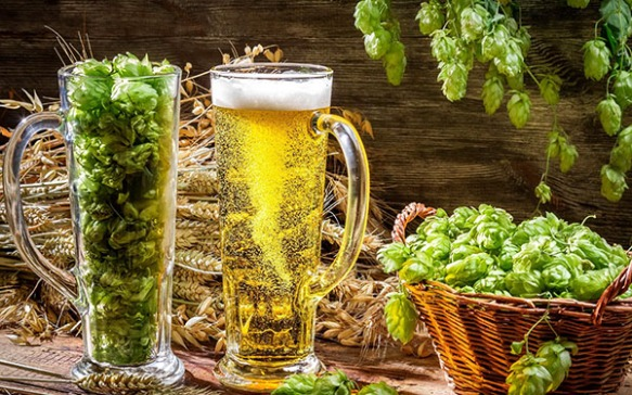 hops-beer-glass