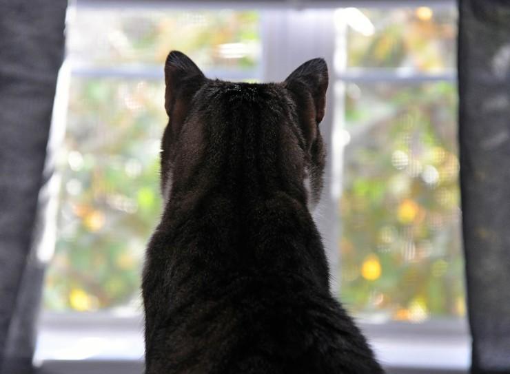 caesar window for web